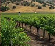 Photo of Stags Leap Wine Cellars - Napa, CA