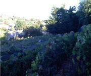 Photo of Valley Girl Vineyards - Napa, CA