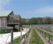 Photo of Cape May Winery and Vineyard - Cape May, NJ