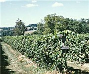 Photo of Loew Vineyards - Mt Airy, MD