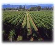Photo of Bridgeview Vineyards & Winery - Cave Junction, OR