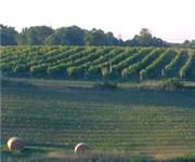 Photo of Madison Vineyards Estate Winery - Madison, IN