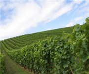 Photo of De Natale Vineyards - Healdsburg, CA