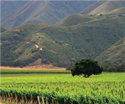 Photo of Hahn Estates - Soledad, CA