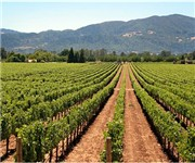 Photo of Mario Perelli-Minetti Winery - St Helena, CA