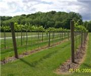 Photo of Lasata Winery - Lawrenceville, IL