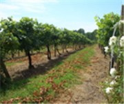 Photo of Mount Nittany Vineyard and Winery - Centre Hall, PA
