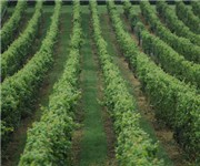 Photo of Paradocx Vineyard - Landerberg, PA