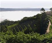 Photo of Barnett Vineyards - St Helena, CA
