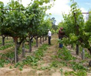Photo of Dehlinger Winery - Sebastopol, CA
