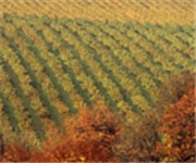 Photo of Cavatappi Winery - Kirkland, WA