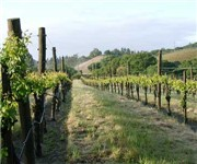 Photo of Joseph Swan Vineyards - Forestville, CA