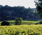 Photo of Limerick Lane Vineyards - Healdsburg, CA