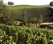 Photo of Merryvale Vineyards - St Helena, CA