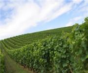 Photo of Pezzi King Vineyards - Healdsburg, CA