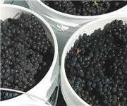 Photo of Pleasant Valley Vineyards - Aptos, CA